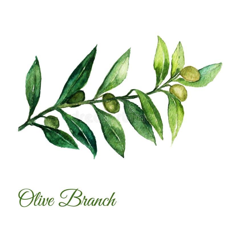 导航与绿色叶子的水彩手拉的橄榄树枝illusration在白色背景 向量例证