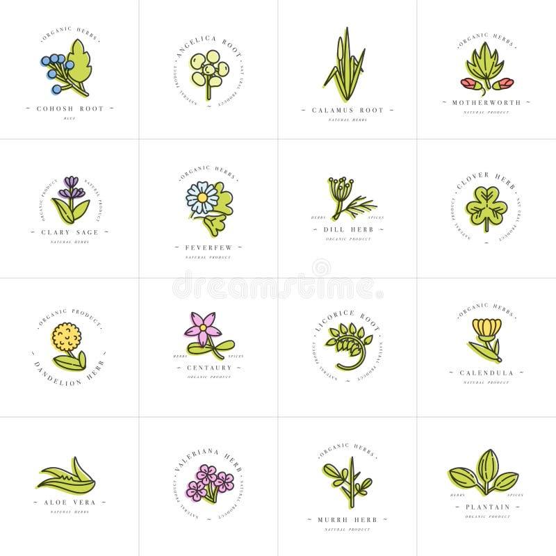 导航五颜六色的布景模板和象征-健康草本和香料 不同的医药,化妆植物 徽标 向量例证