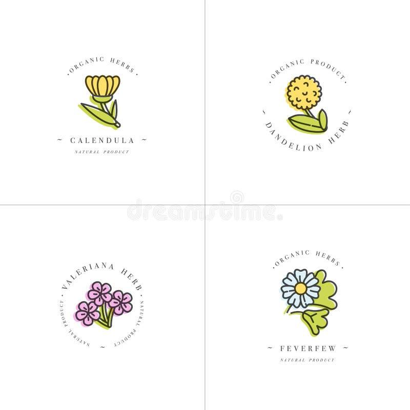 导航五颜六色的布景模板和象征-健康草本和香料 不同的医药,化妆植物 库存例证