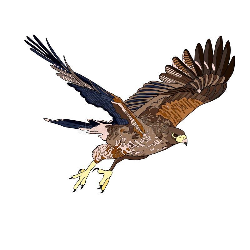 导航例证,飞行鹰的图象 黑线,黑白和灰色斑点,黑剪影,颜色图象 皇族释放例证