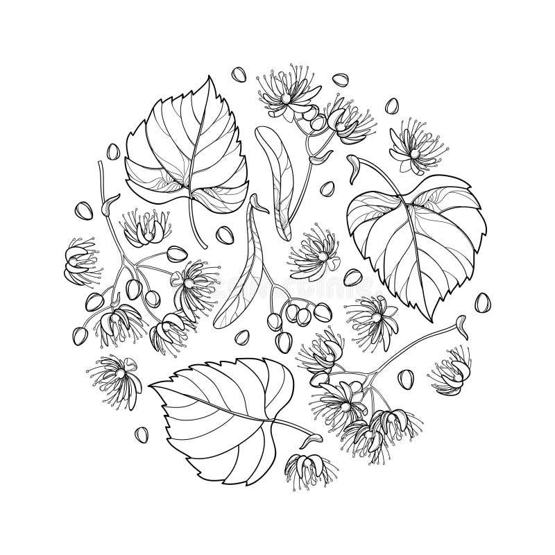 导航围绕概述菩提树或椴树属或者美国鹅掌楸花的构成束、在黑色被隔绝的苞、果子和华丽叶子 库存例证