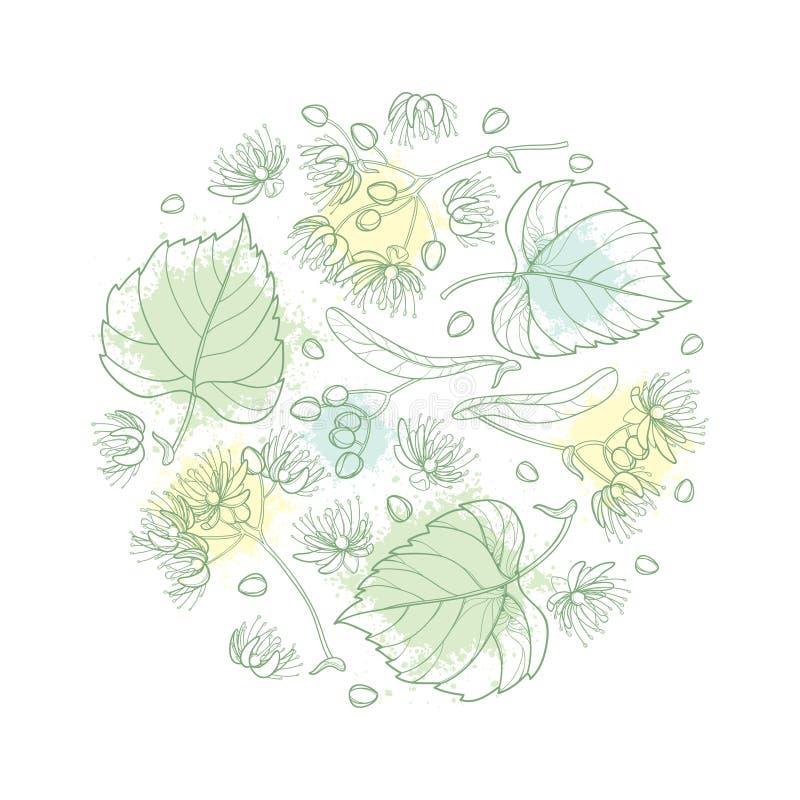 导航围绕概述菩提树或椴树属或者美国鹅掌楸花的构成束、苞、果子和华丽叶子在被隔绝的柔和的淡色彩 向量例证