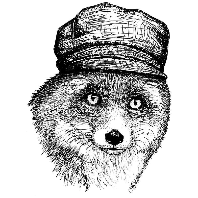 导航在加工好的狐狸的帽子和手拉的例证的狐狸 向量例证