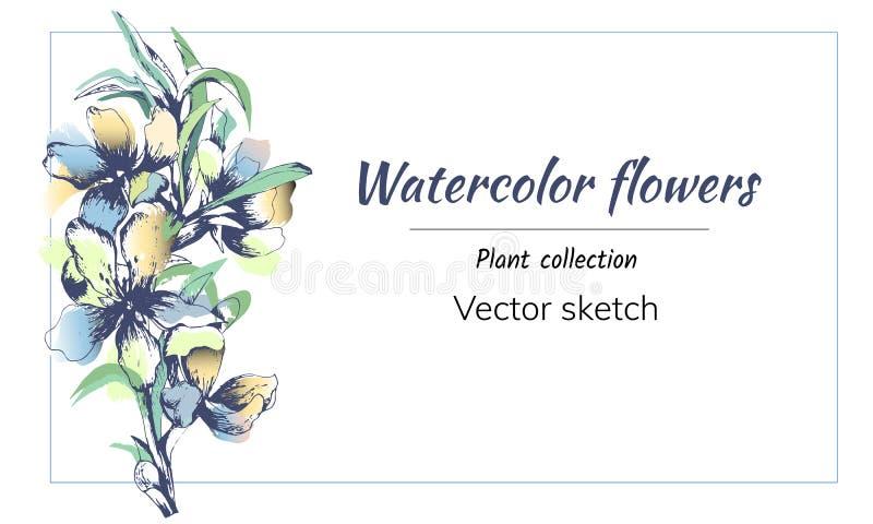 导航在白色背景的柔和的花 与水彩花的语篇框架图招呼和邀请的 r 向量例证