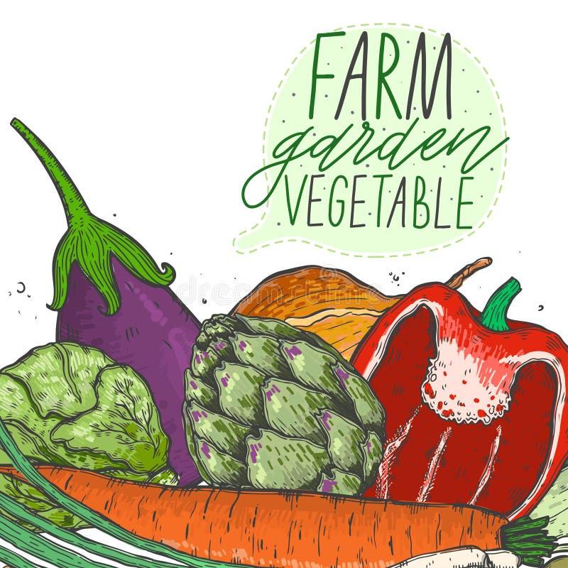 导航大套在一个现实剪影样式的菜 健康食物,自然产品,菜农场,素食主义者食物,炫耀nutrit 向量例证