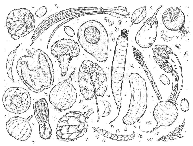 导航大套在一张现实剪影样式黑白照片的菜 健康食物,自然产品,菜农场,素食主义者食物, sp 向量例证