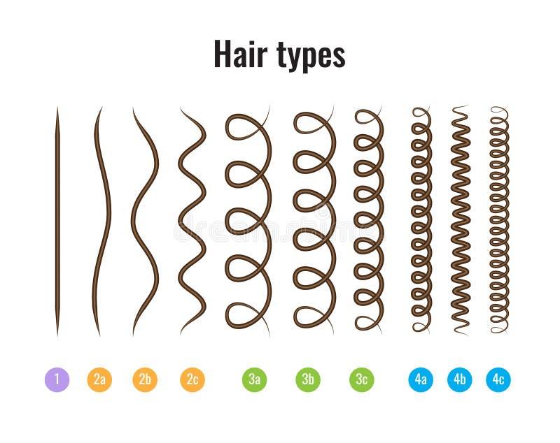 导航头发类型显示所有类型的图的例证并且标记了 库存例证
