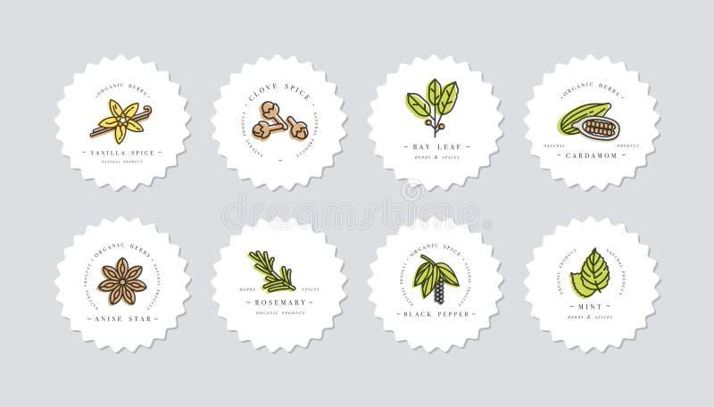 导航布景五颜六色的模板商标和象征-草本和香料 另外香料象 在时髦线性的商标 向量例证