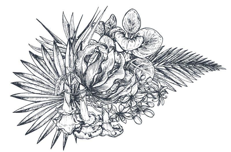 导航手拉的热带花,棕榈叶,密林植物的构成图片