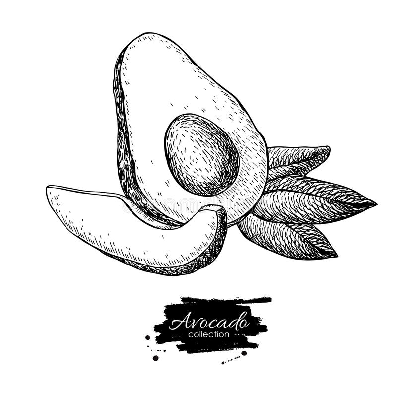 Download 导航手拉的鲕梨、被切的片断和叶子 向量例证. 插画 包括有 部分, 对象, 果子, 可怕地, 异乎寻常, 原始 - 72370719