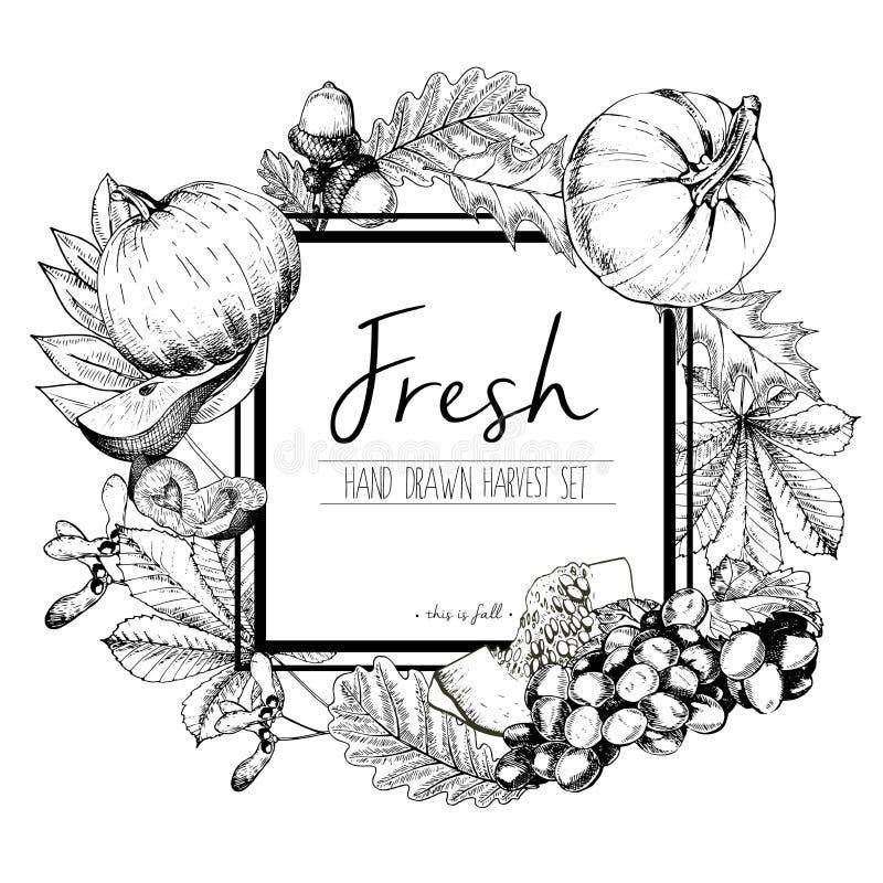 导航新鲜蔬菜的方形的边界彩色插图 手拉的葡萄酒被刻记的套素食鲜美食物 向量例证