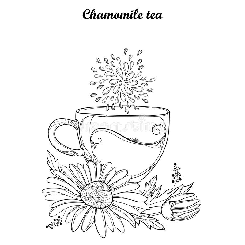 导航杯子在白色背景隔绝的春黄菊清凉茶 概述春黄菊花和华丽瓣在等高样式 皇族释放例证