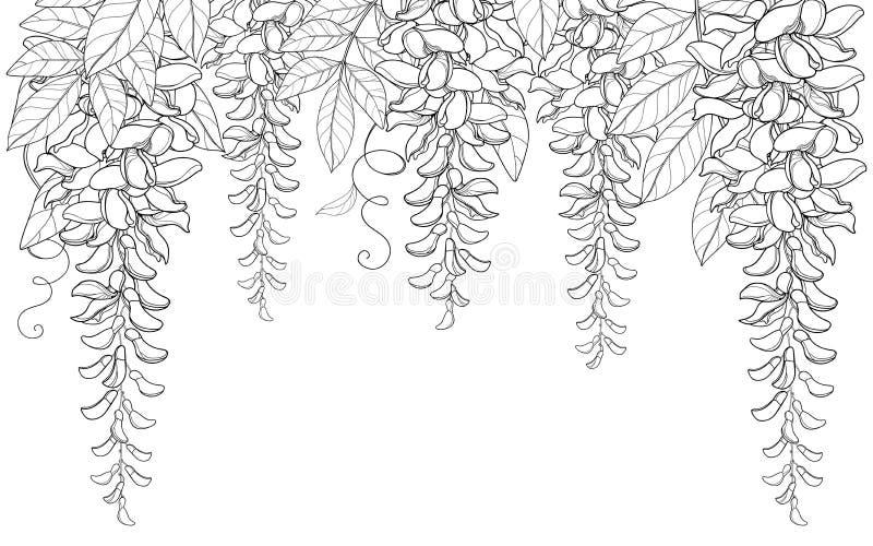 导航概述紫藤或紫藤花曲拱或在白色背景和叶子在黑色隔绝的隧道束,芽 皇族释放例证
