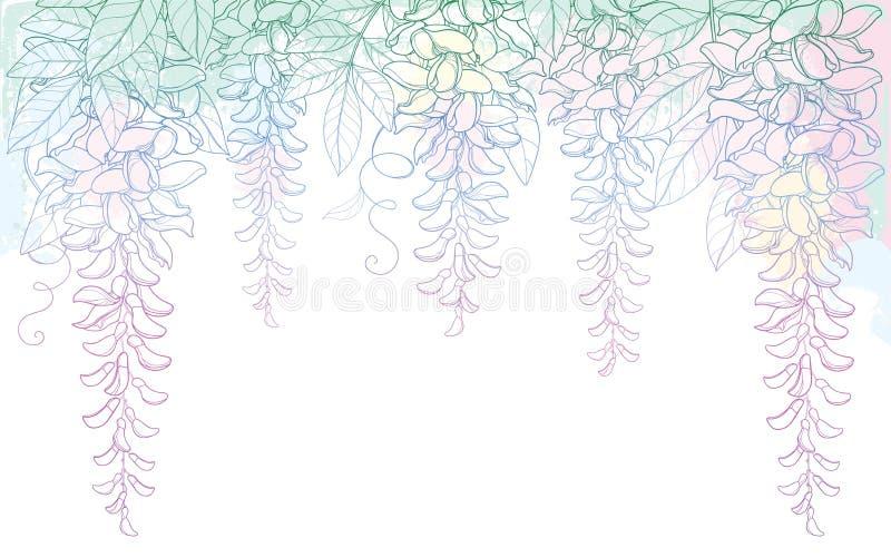 导航概述紫藤或紫藤花曲拱或隧道束,芽和叶子在粉红彩笔在白色背景 皇族释放例证