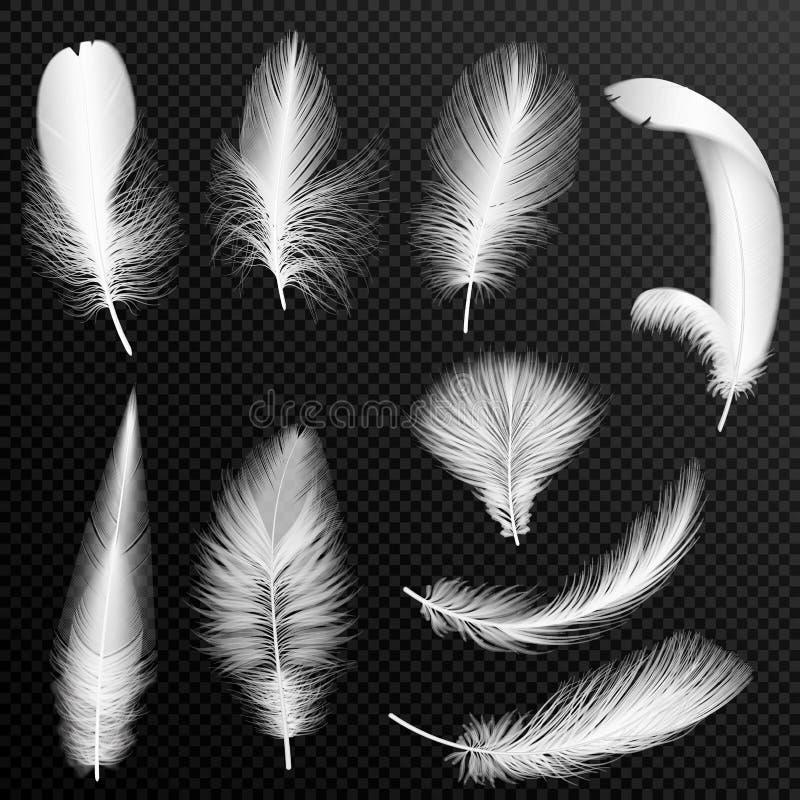 导航现实胆怯收藏 设置蓬松羽毛,隔绝在阿尔法透明背景 向量例证
