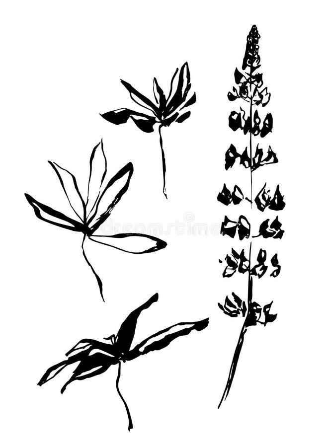 导航羽扇豆黑手拉的花和叶子  墨水绘的风格化印刷品 向量例证