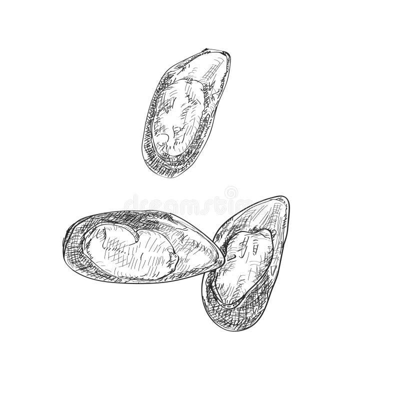 导航高度详细的手拉的淡菜的板刻例证 皇族释放例证