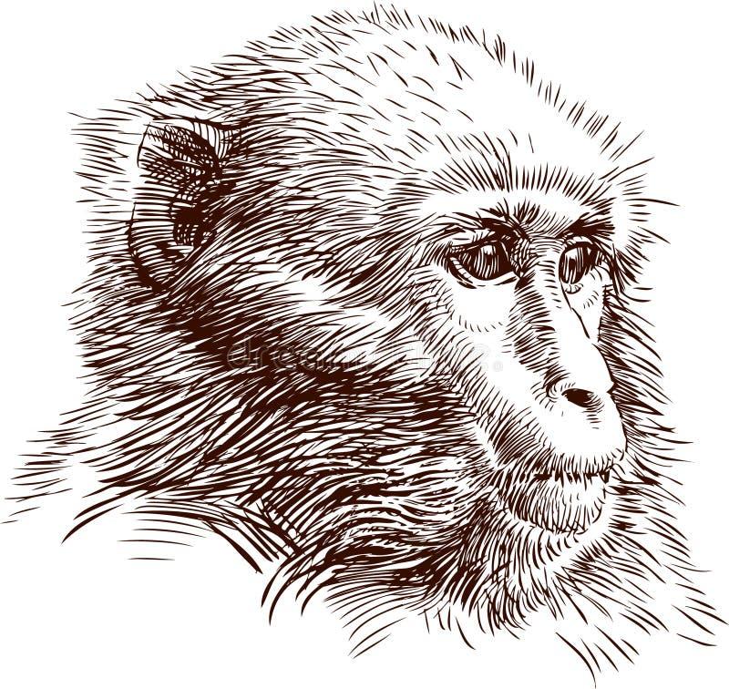 猴子 皇族释放例证