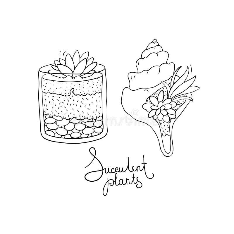 导航玻璃玻璃容器和贝壳与被设置的多汁植物 库存例证