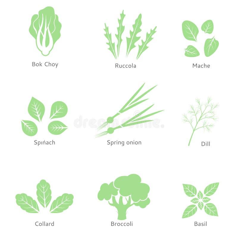 导航eco,有机,生物商标或标志 沙拉柜台 绿色留下沙拉 素食食物 皇族释放例证
