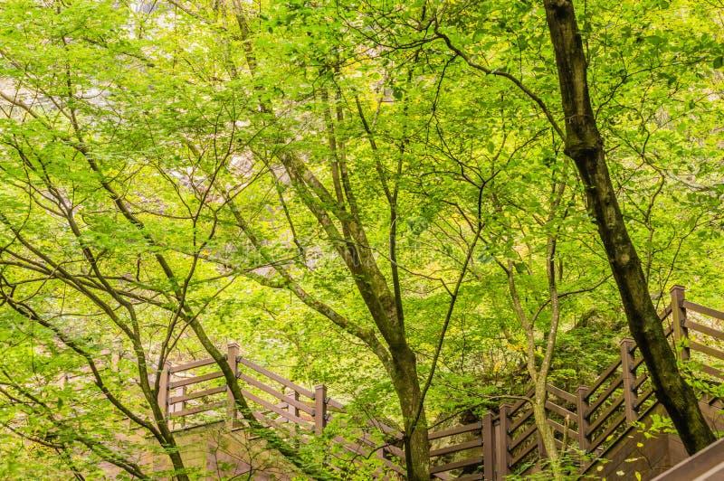 导致山边的木楼梯 图库摄影