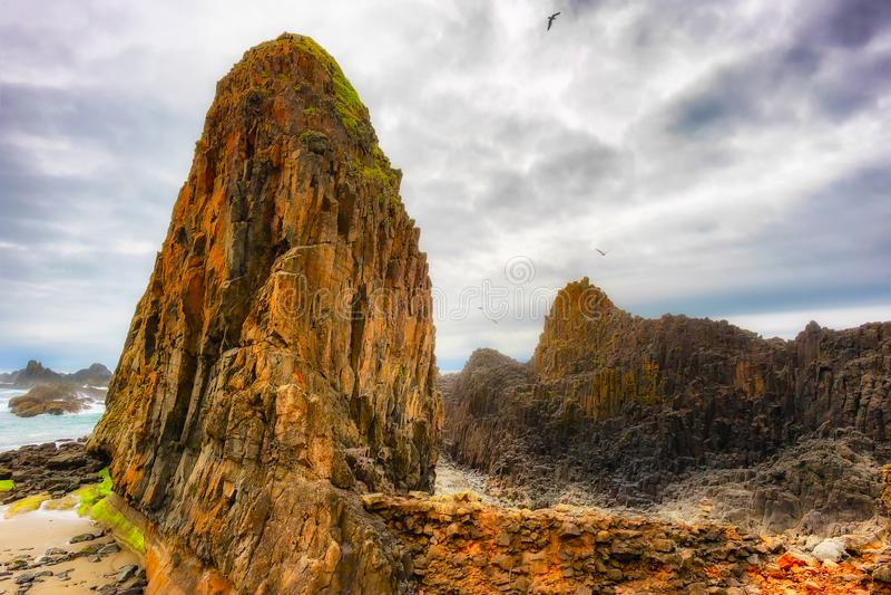 封印在俄勒冈海岸的岩石海滩 图库摄影