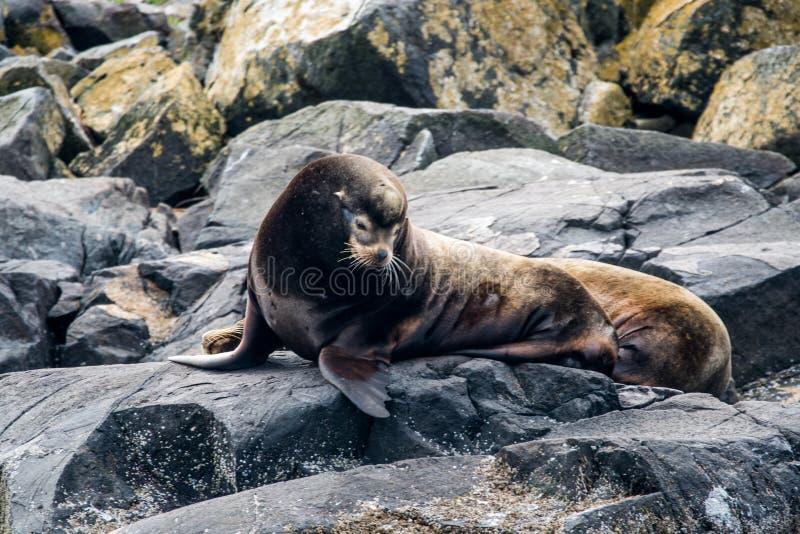 封锁温哥华岛海岸  免版税库存照片