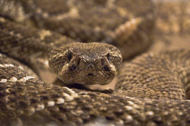 射击蛇玻璃容器 免版税库存照片