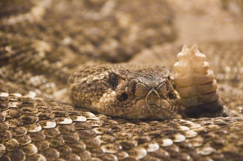 射击蛇玻璃容器 库存图片