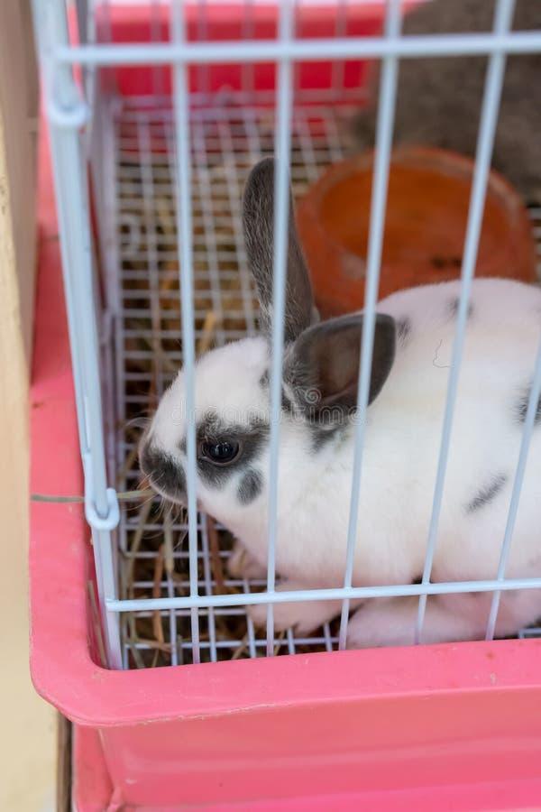 射击通过白色兔子笼子与黑耳朵和scat的 免版税库存图片