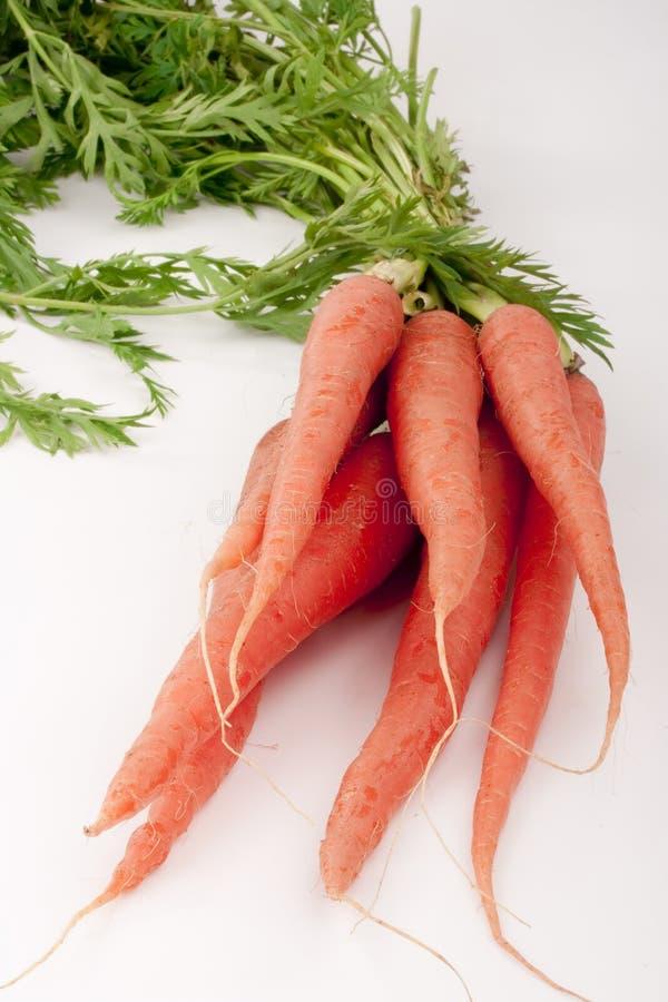 射线红萝卜