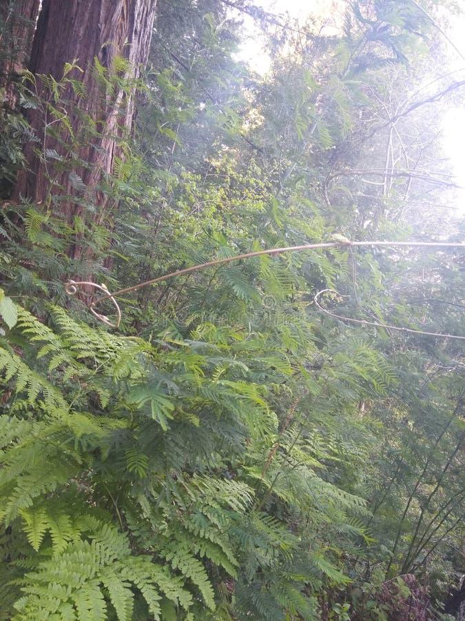 将您进入有我的森林 免版税库存照片