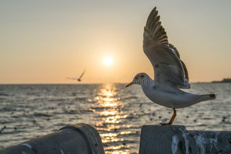 将飞行的海鸥和翼传播了上流 库存图片