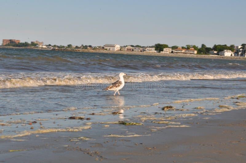尊敬海滩 库存照片