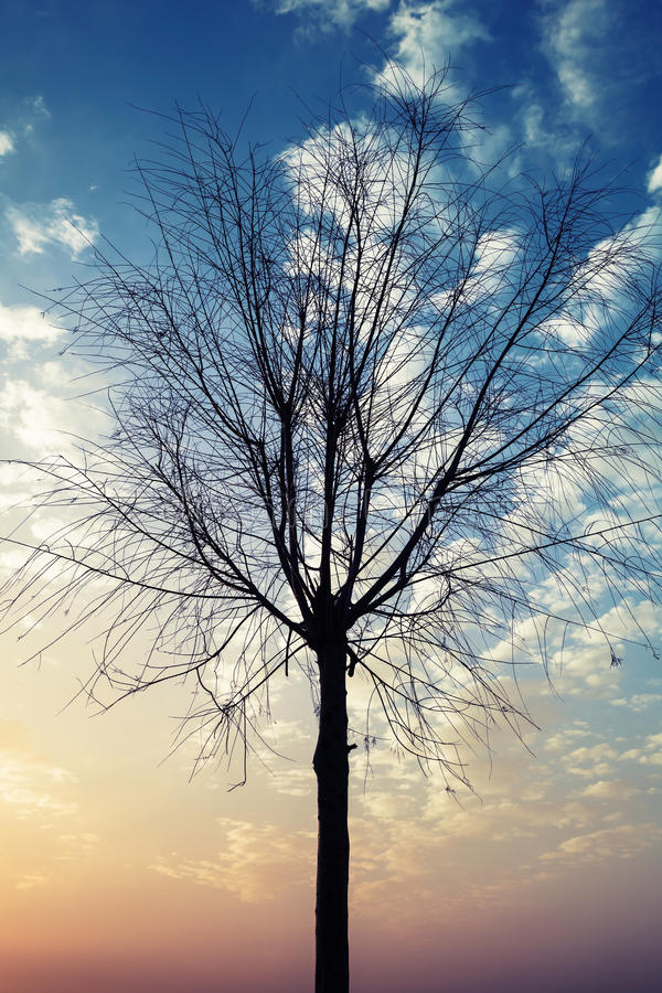 小不生叶的光秃的树黑剪影  库存图片