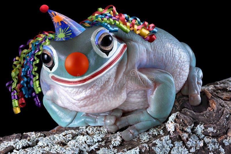 小丑青蛙 免版税库存图片