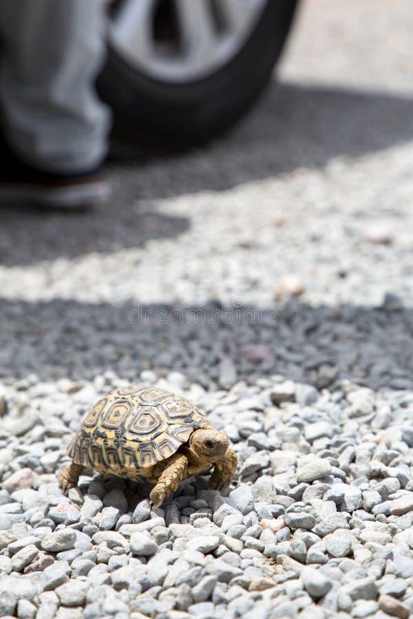 小乌龟 免版税图库摄影