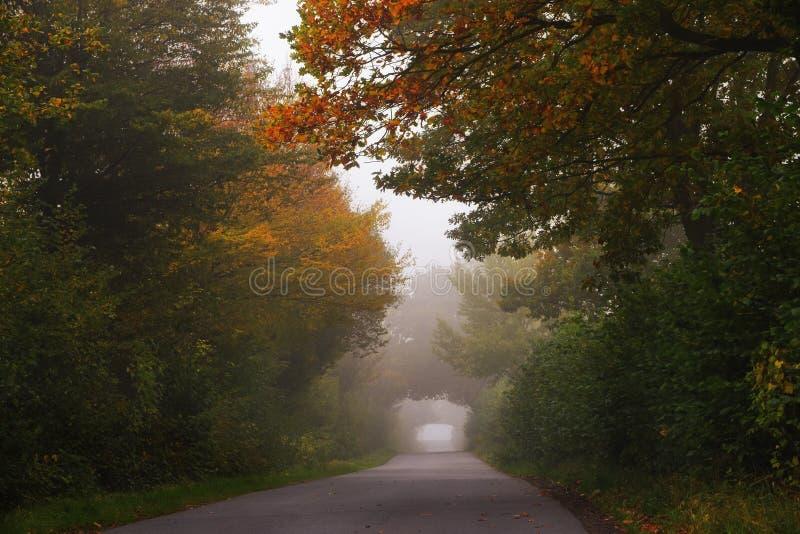 小乡下公路通过有雾的秋天森林带领与去 图库摄影