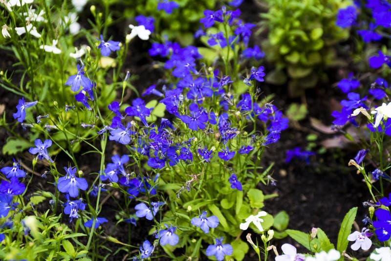 小五颜六色的野花在森林里 免版税图库摄影