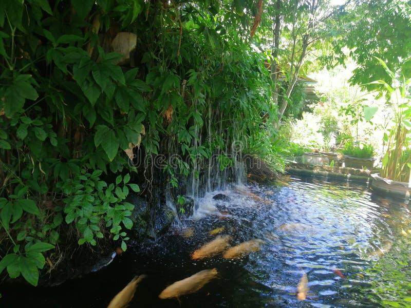 小井池塘在树荫下 免版税库存图片
