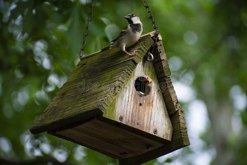 小公麻雀被栖息在他的屋顶 库存照片