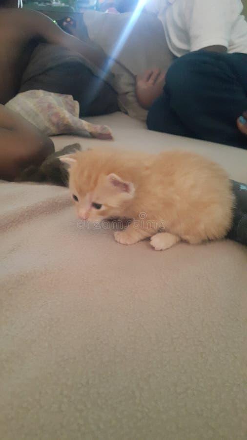 小加菲尔德小猫 免版税库存图片