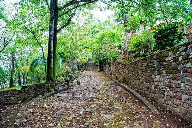 小卵石、石路在热带密林木头中或雨林 免版税库存图片
