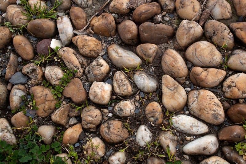 小卵石和草 免版税库存照片