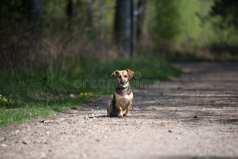 小可爱的狗独自坐着 免版税库存图片