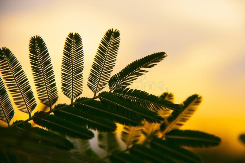 小叶子剪影在同样叶柄包括 免版税图库摄影