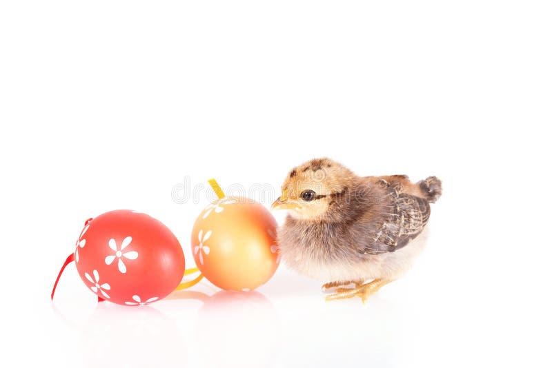 小在白色隔绝的鸡和鸡蛋 库存图片