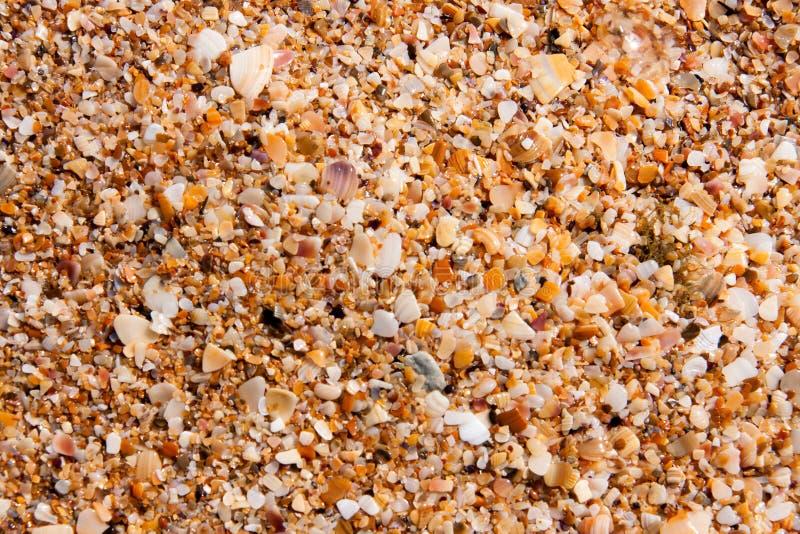 小壳沙子在海岸的当背景特写镜头 图库摄影