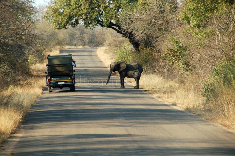 小大象的会议 免版税库存照片