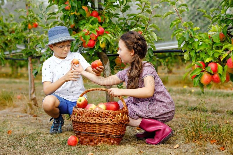 小女孩和孩子男孩画象用红色苹果在有机果树园 愉快的兄弟姐妹、孩子、兄弟和姐妹 免版税库存照片